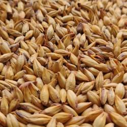 Słód Cara Gold 1kg Castlemalting
