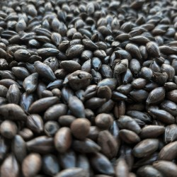 Extra Black malt 0,5kg - Bestmalz