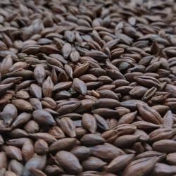 Słód Chocolate 0,5kg Thomas Fawcett