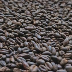 Roasted Wheat malt 1kg - Thomas Fawcett