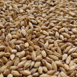 Enzyme malt 0,5kg - Viking Malt
