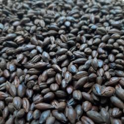Słód Carafa Special typ III 0,5kg Weyermann