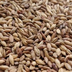 Słód Melanoidynowy 40EBC 0,5kg Castlemalting