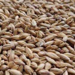 Słód Monachijski Ciemny 1kg Bestmalz