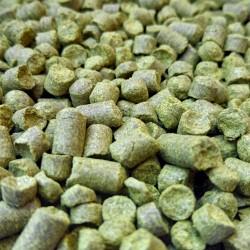 Brewers Gold 50g DE