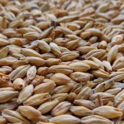 Słód Pilzneński 1kg Viking Malt