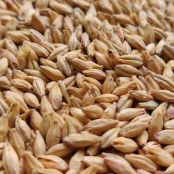 Słód Pilzneński 1kg Castlemalting