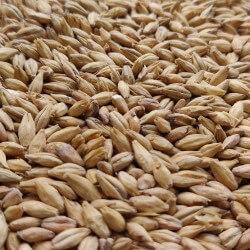 Acidulated malt 0,25kg - Bestmalz
