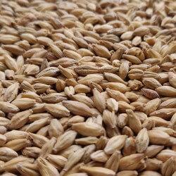 Acidulated malt 1kg - Bestmalz